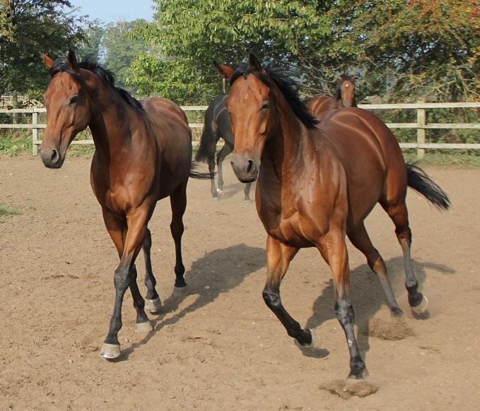 winning racehorse