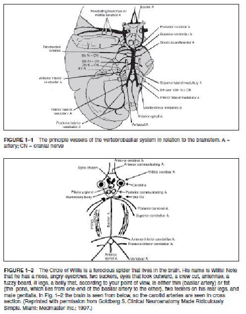 Fisioterapeuta Luís Miguel Brazão Gouveia: STROKE Acidente vascular cerebral (AVC)