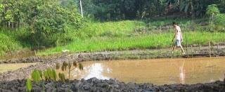 cara budidaya ikan nila di kolam terpal,di kolam tembok,di kolam terpal pdf,kolam beton,