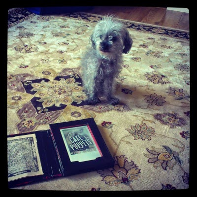 A tiny, fuzzy grey poodle--Murchie--sitting some distance from an e-reader with the cover art for Night of Cake & Puppets displayed on it. The art shows a birdcage with the title superimposed over it at an angle, in distressed white font. The primary colours are shades of grey.