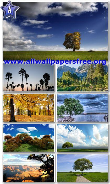 200 Beautiful Trees Full HD Wallpapers 1920x1080 Px