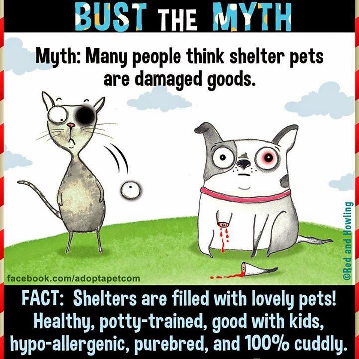 Save Shelter Animls