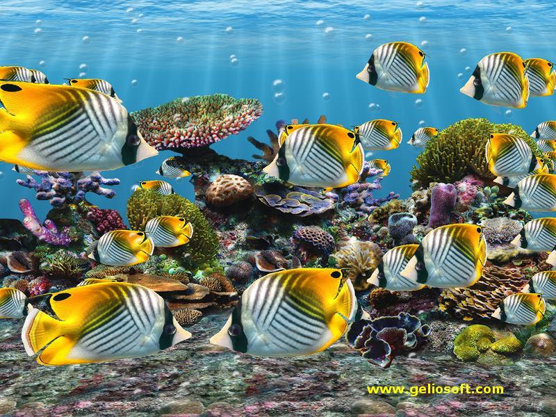 fish tank wallpaper hdFish Tank Wallpapers Hd