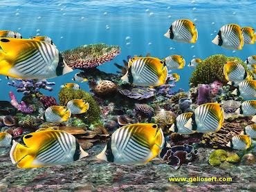 #3 Fish Wallpaper