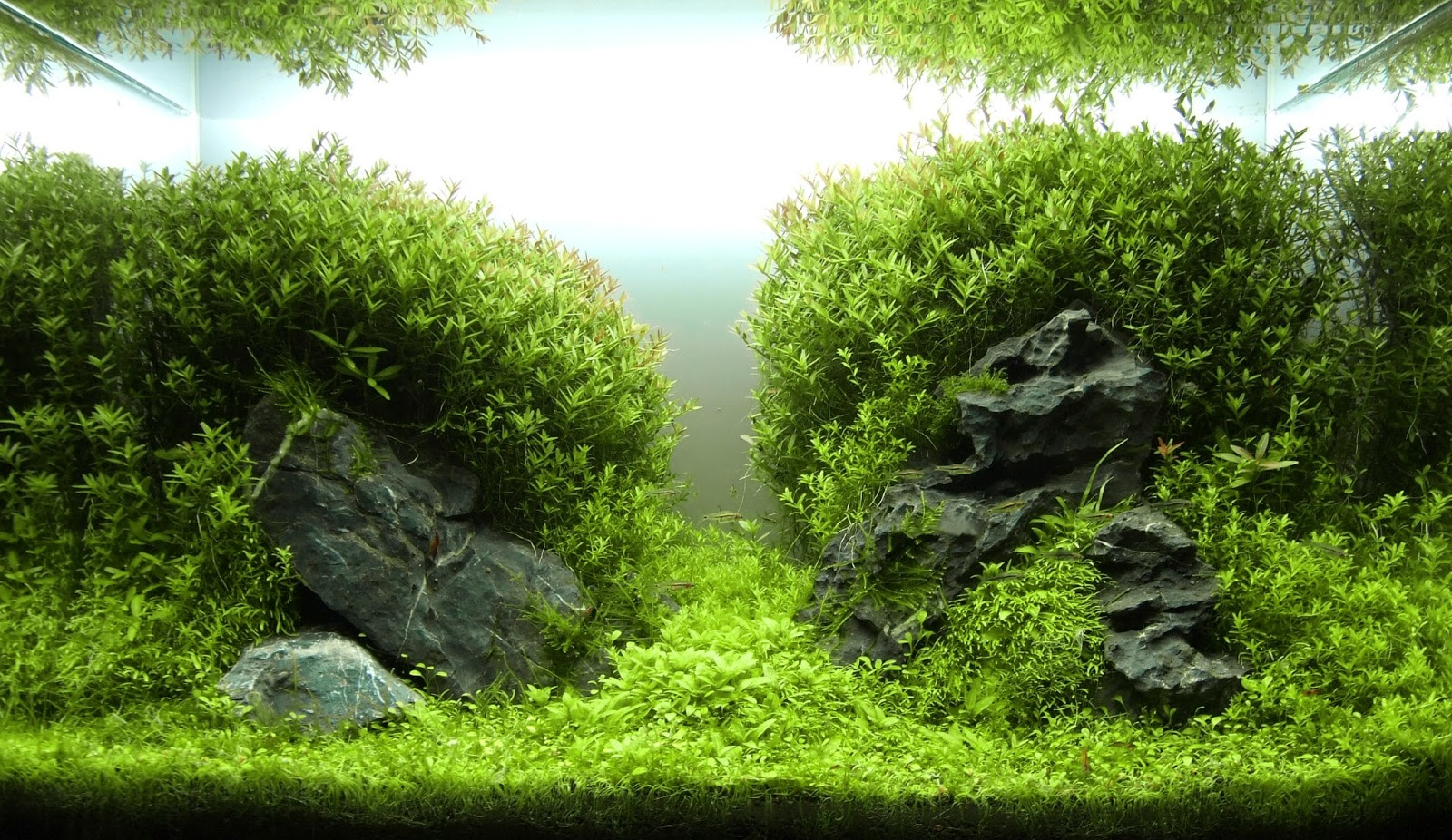 Aquascape Gallery NAscapers Spain