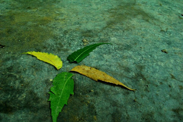 four different leaves on a green tinted rock