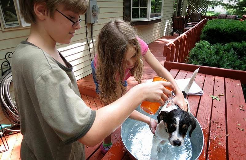 Aprenda a dar banho no seu pet