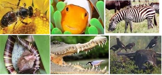 Hasil gambar untuk simbiosis mutualisme