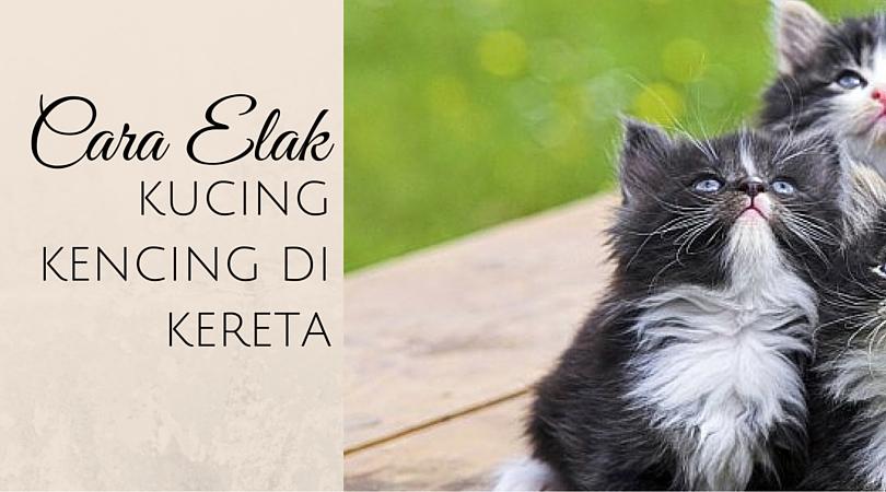 Cara Elak Kucing Kencing Di Kereta