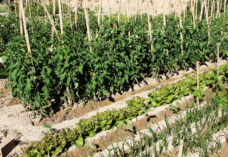 zaragoza salvaje huertos urbanos On huerto de tomates y pimientos