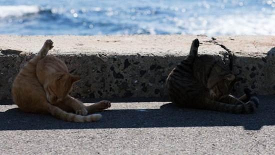 kucing-jilat-badan