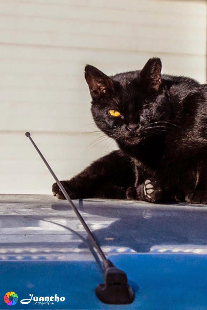Gato Negro sobre el tejado