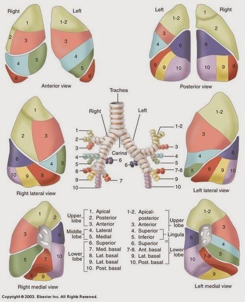 El Blog de Isa y Juan: Tumor fantasma pulmonar
