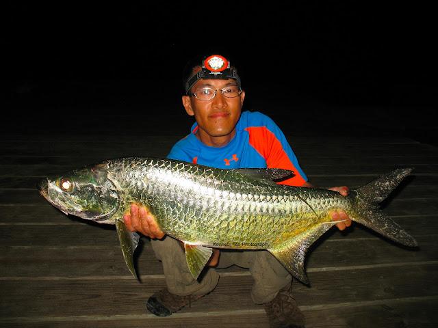 Actinopterygii_Elopiformes_Megalopidae_M