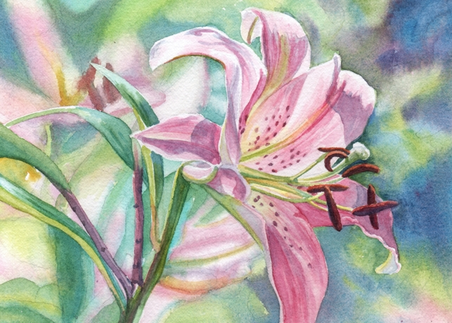 Watercolor Reflections Pink Oriental Lily On Daily Paint