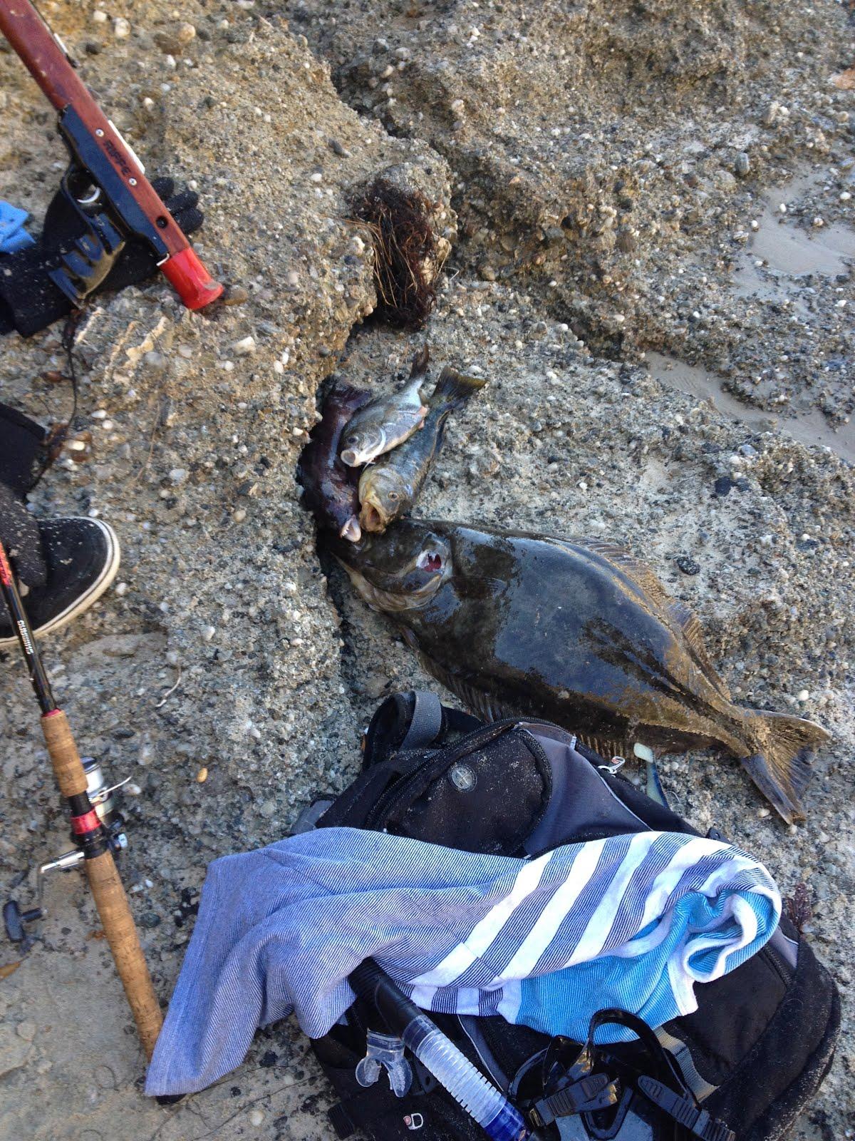 Anthony deep diver blog strand beach dana point for Deep sea fishing dana point