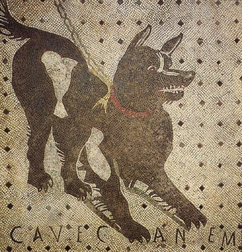 Cave canem