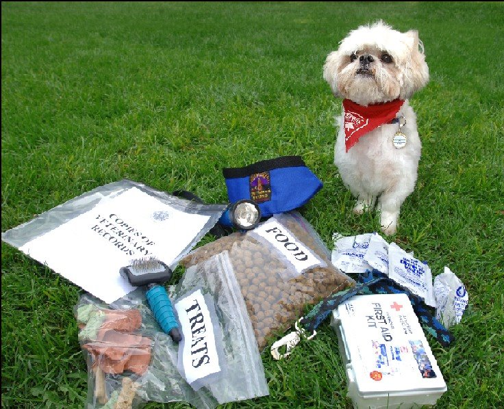 Dog with Emergency Kit