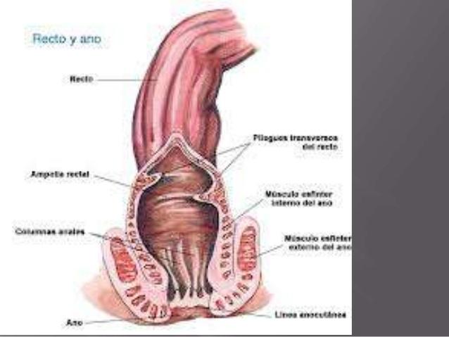 semiología quirúrgica (UTESA)