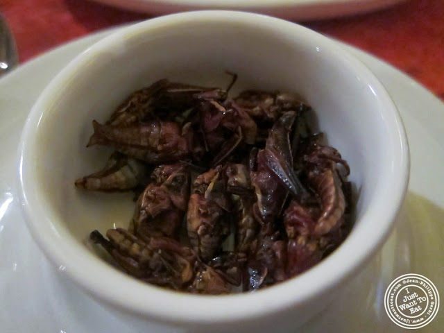 image of Grasshoppers or chapulines at Toloache in NYC, New York