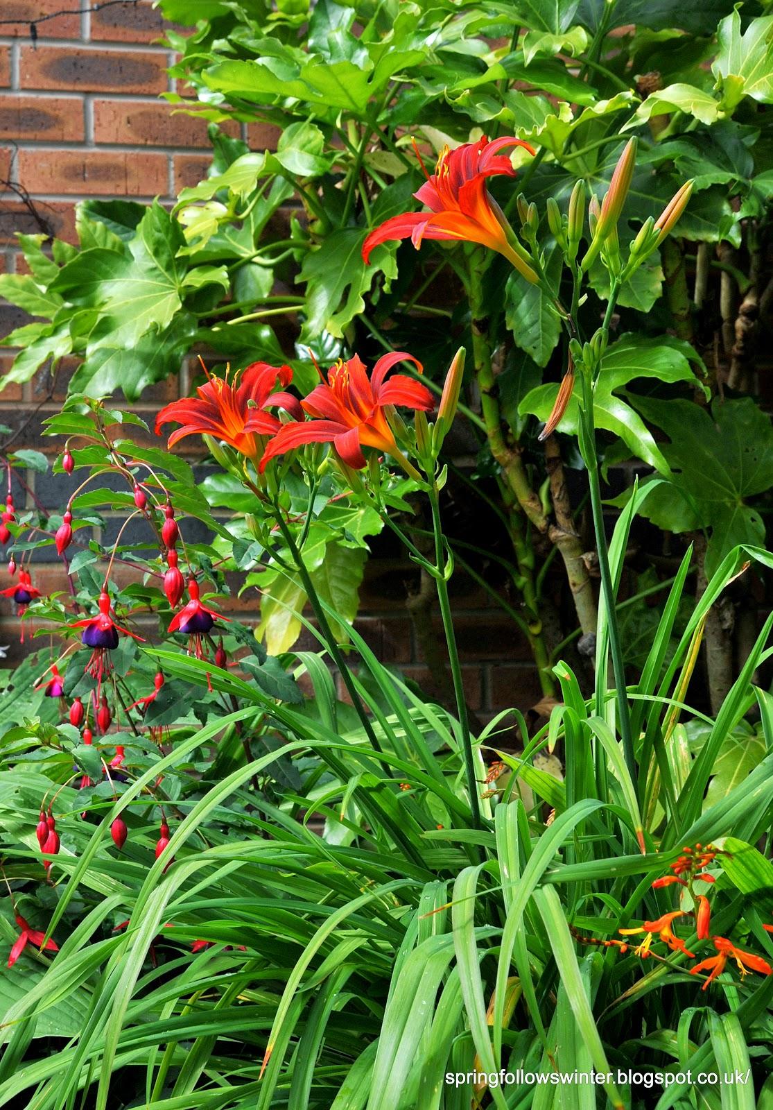 hemerocallis daylilies elegant usually trumpet like blooms in
