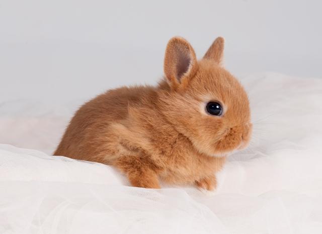 Mis maskotas hermosas - Casas para conejos enanos ...