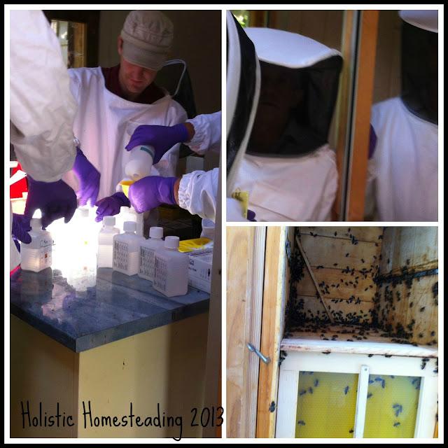 Bee Treatments summer