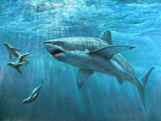 Morski pas download besplatne pozadine slike za mobitele