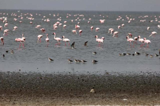lake abijatta shala national park