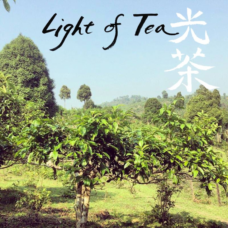 light of tea
