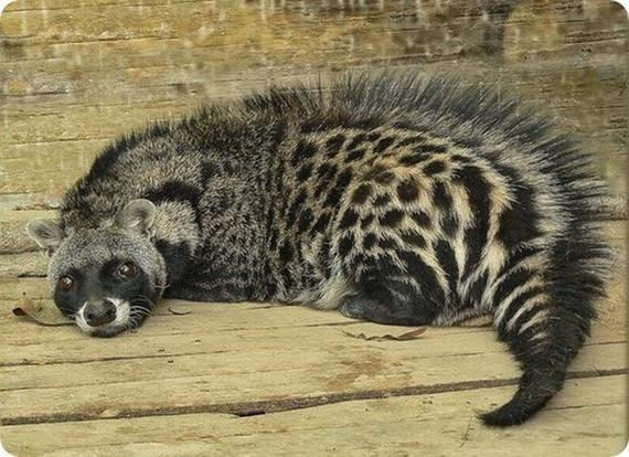 rarest animals in the - photo #14