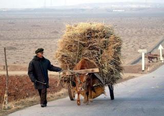 Drought_Northern_Korea_recent_natural_disasters