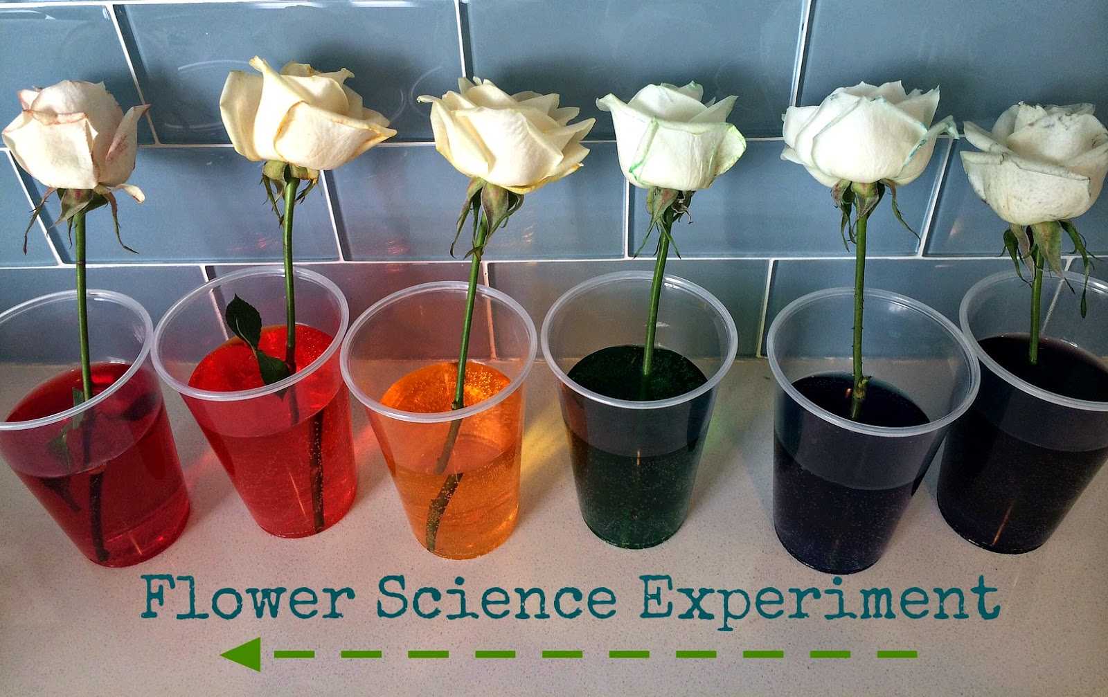 Blue Skies Ahead: Flower Science Experiment for Kids