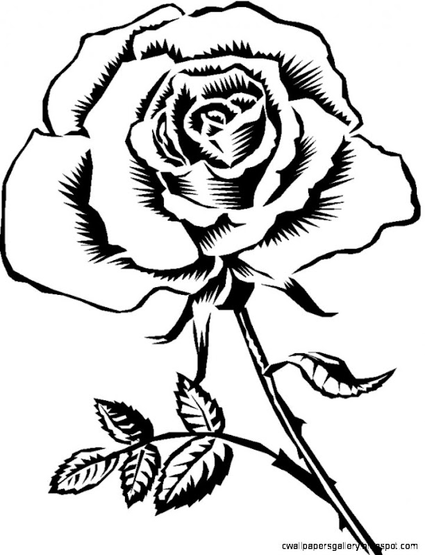 Black Rose Clipart   Clipart Kid