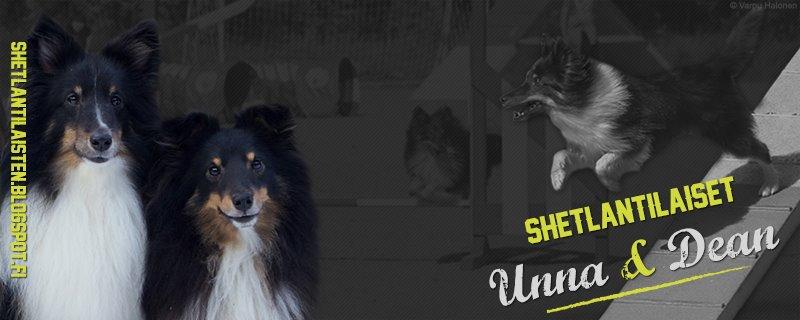 Shetlantilaiset Unna & Dean