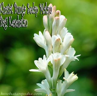 Bunga Sedap Malam dan Manfaatnya