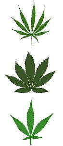 Sativa, Indica, Hybrid