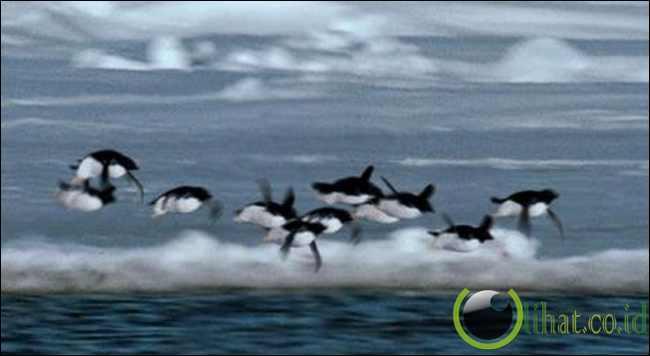 Penguin Terbang