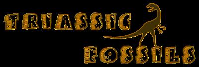 Triassic fossils | roci fosile |