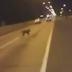 غريب جدا  هل هذا الكلب جني أم شيطان ؟؟ كيف ومن أين ظهر ؟