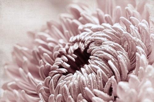 blush pink + flowers