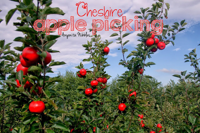 Cheshire Apple Picking from www.anyonita-nibbles.com