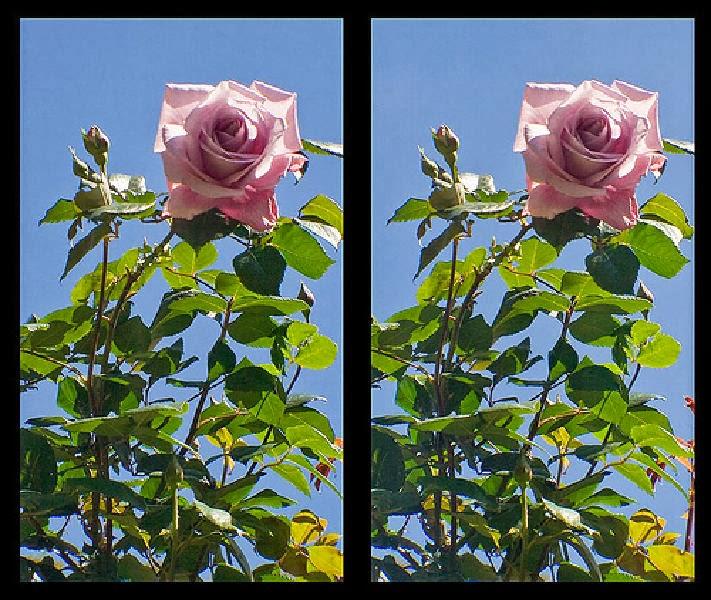 Cara Melihat Gambar 3 Dimensi Tanpa Kacamata