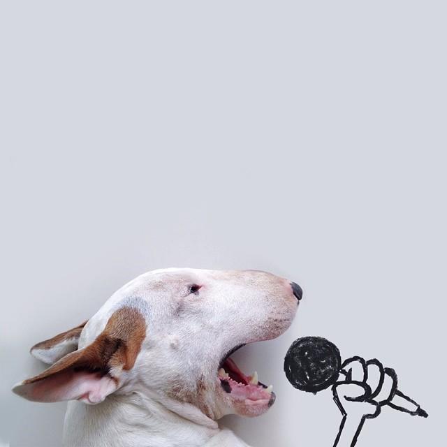 Dueño del perro crea Ilustraciones divertidas con su bull terrier
