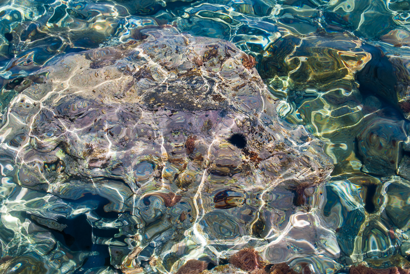 sea urchins in the clear waters in santorini greece image