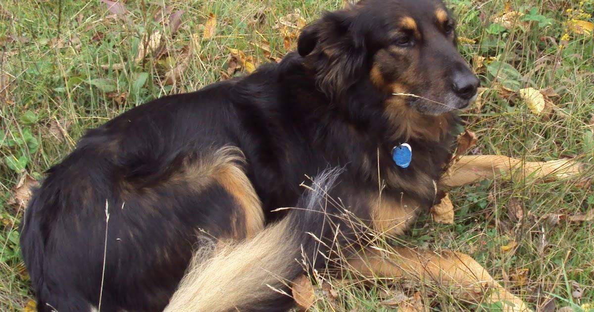 Can Dogs Take Prozac
