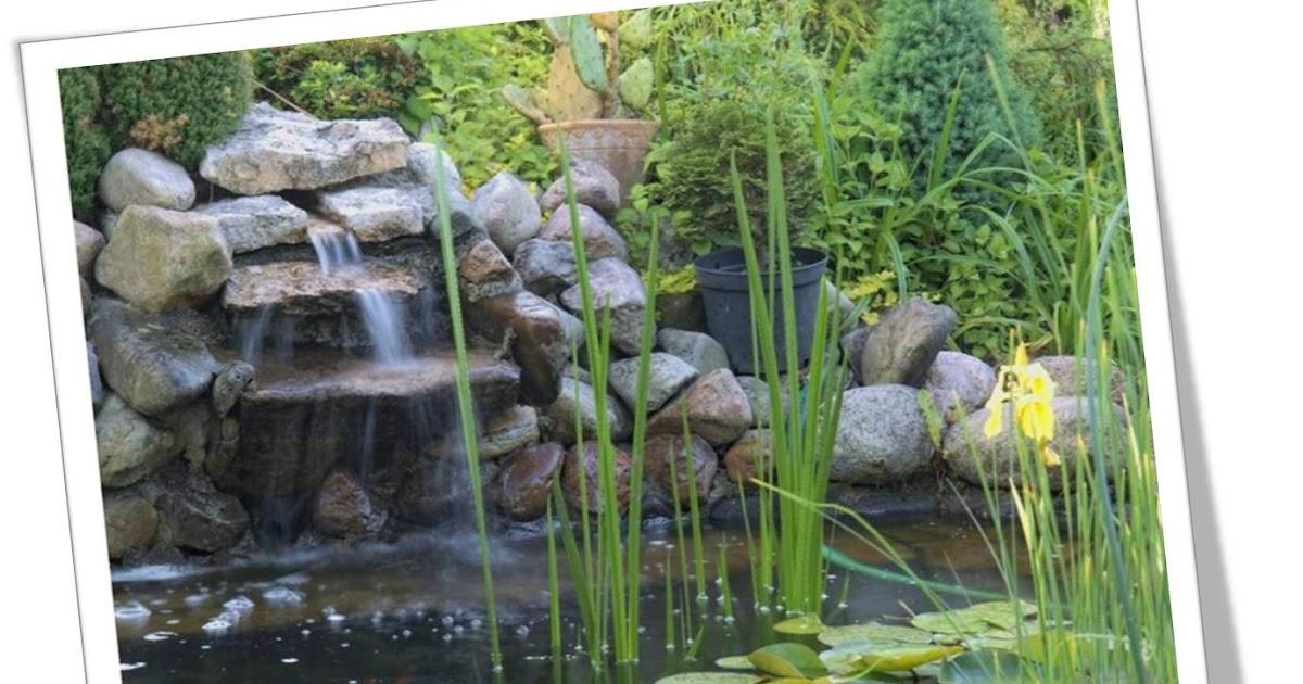 Numerounity koi pond for Koi pond basics