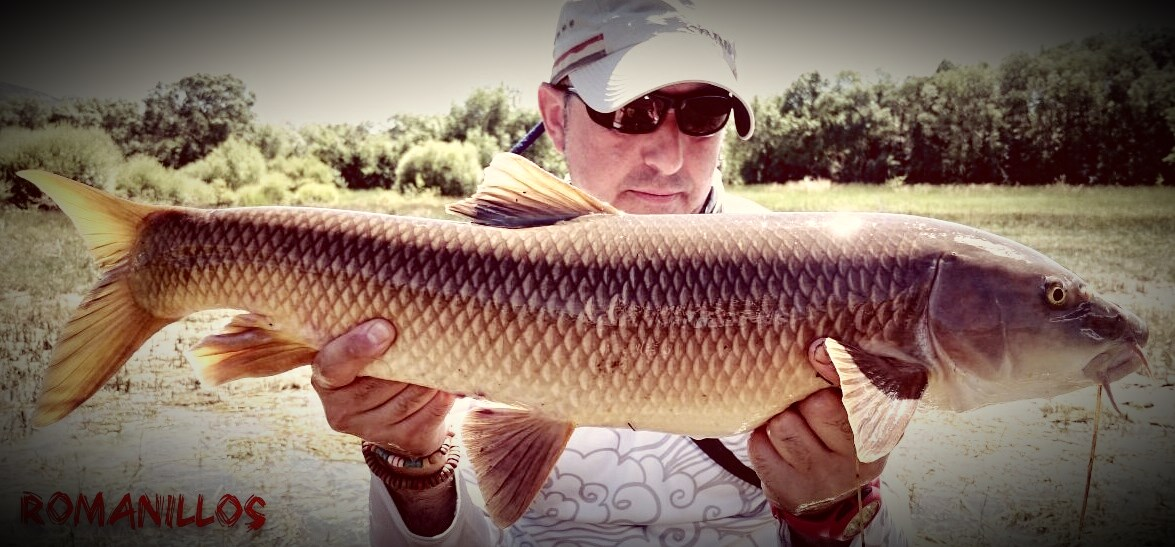 Fly fishing for Barbel