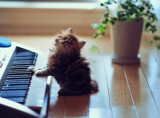 anak-kucing-comel-main-piano
