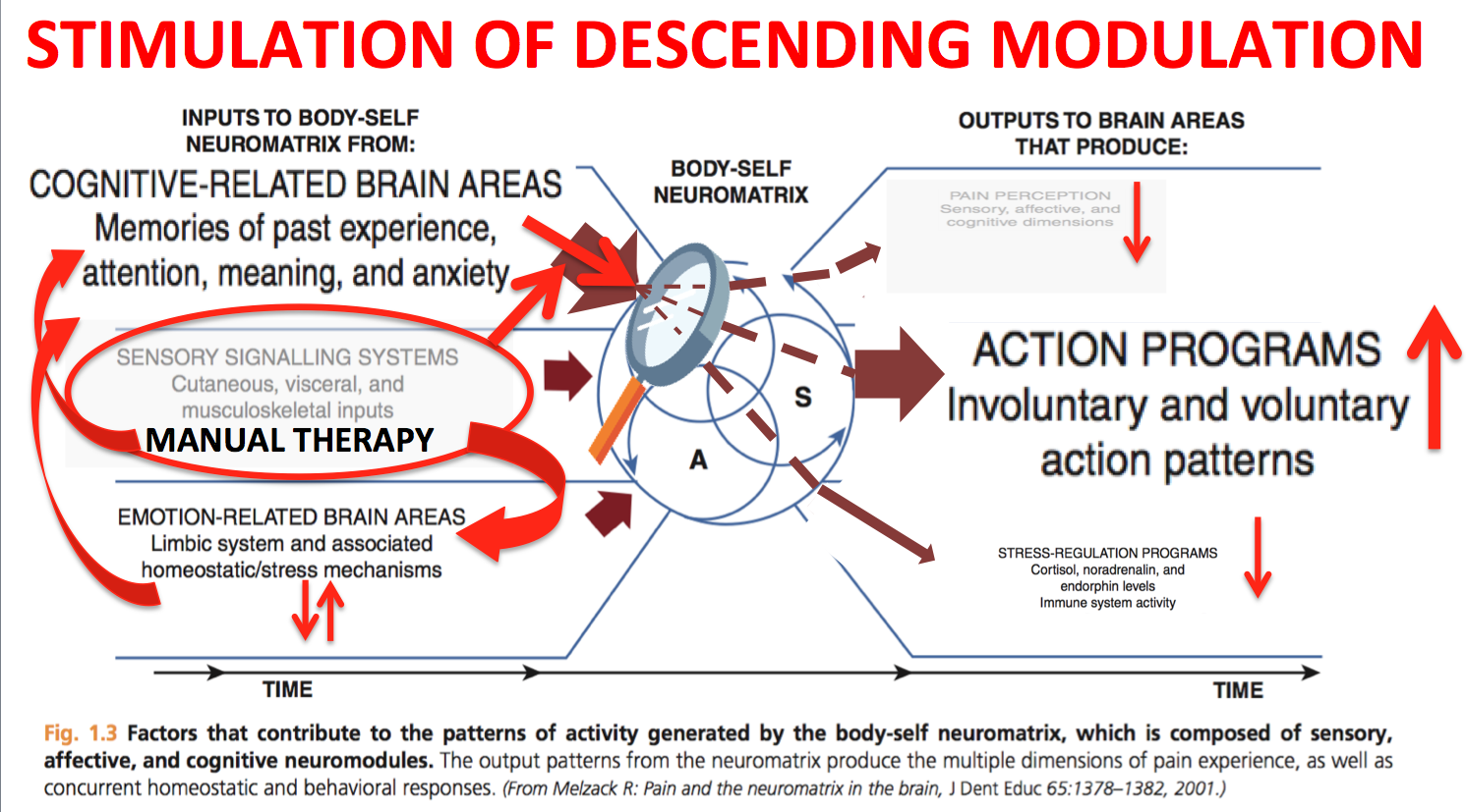 pain neuromatrix and the physiotherapy patient Explaining pain: the neuroscience of out of the threat neuromatrix approach is that virtually any hypersensitivity to pain patients with chronic pain have.